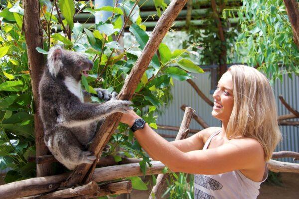 The Retreat Port Stephens - koala