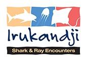 Irukandji Shark encounters are Next Door »