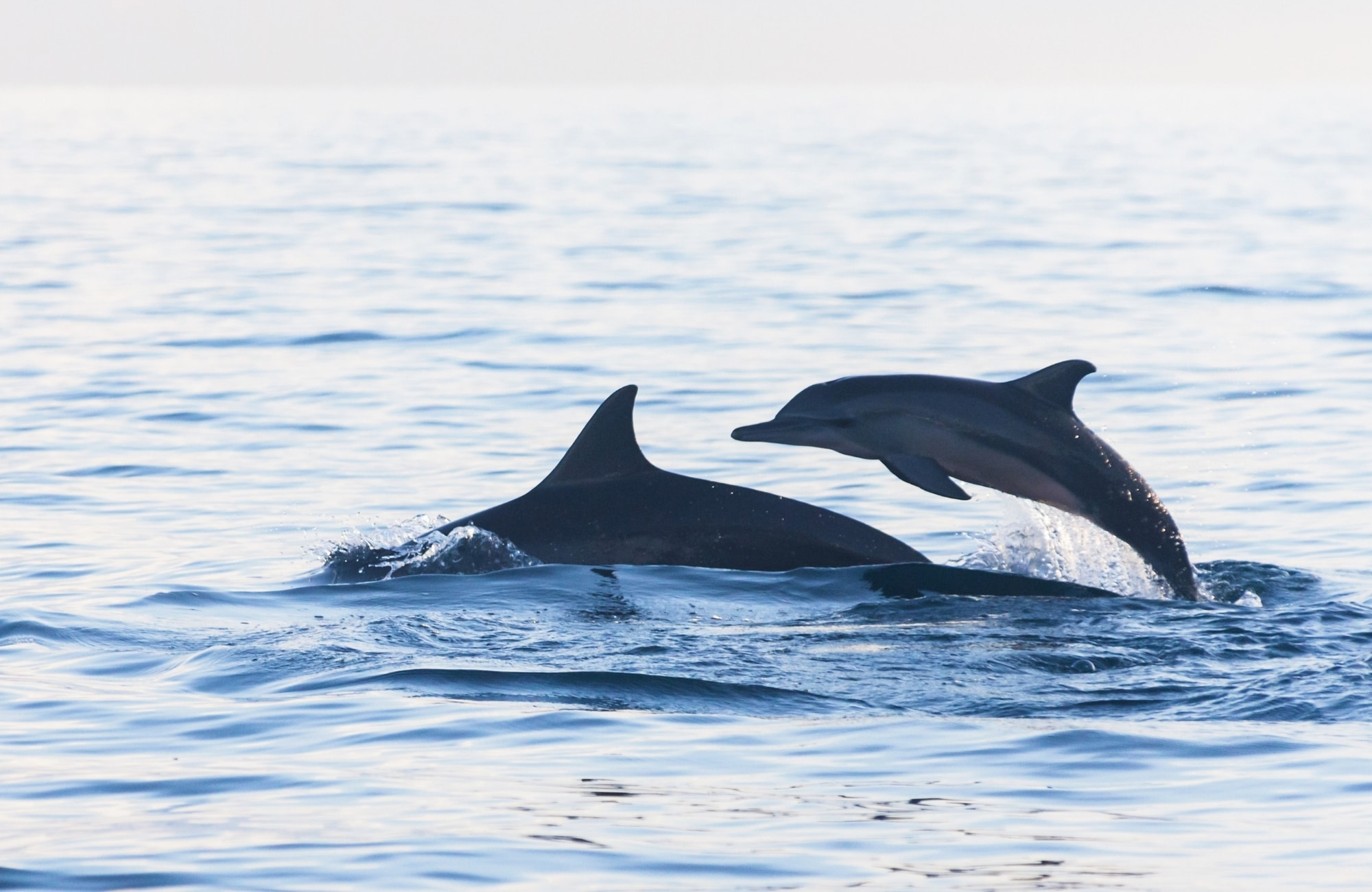 Take a Dolphin- or Whale-Watching Cruise