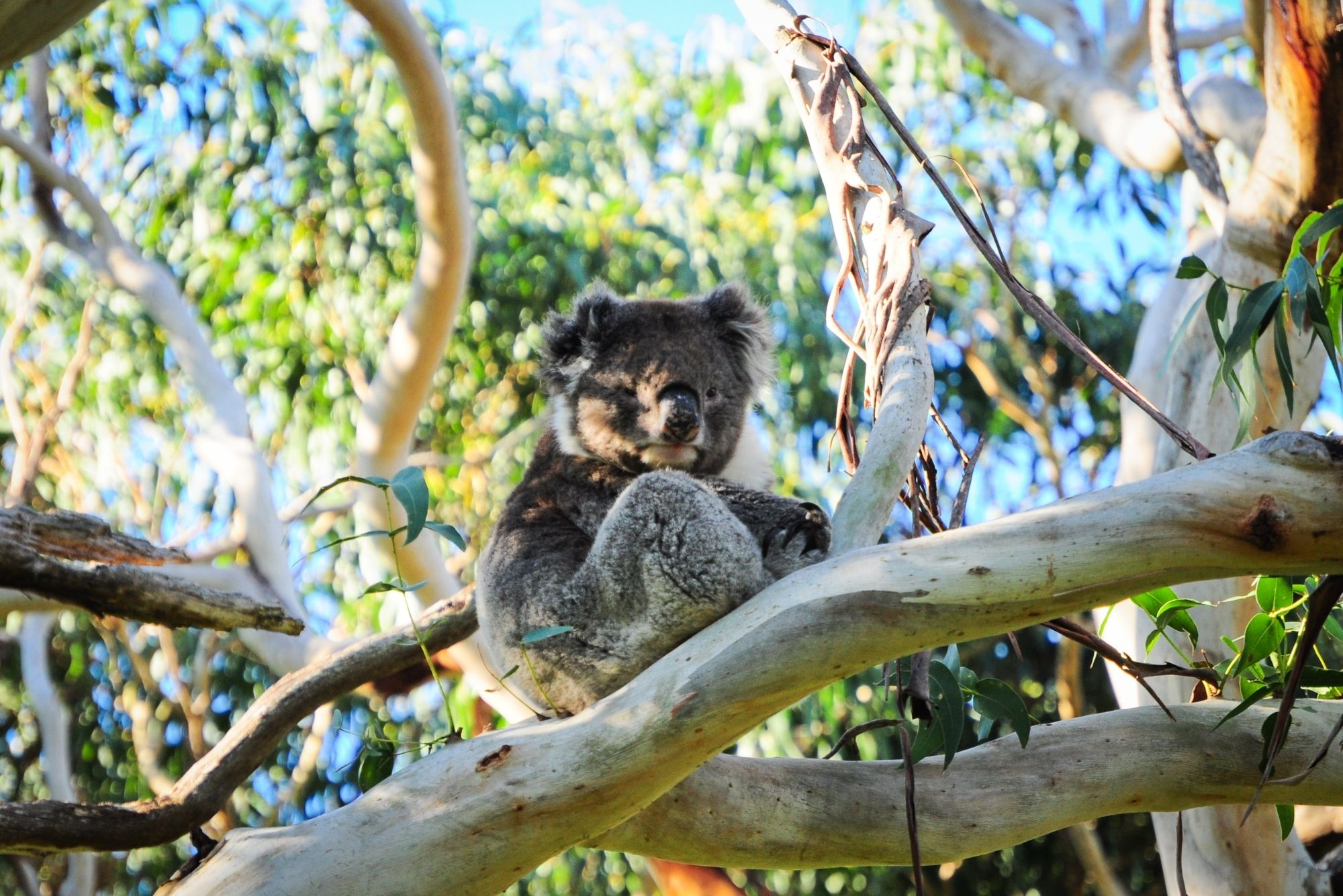 Where can you find Port Stephens Koala Sanctuary?