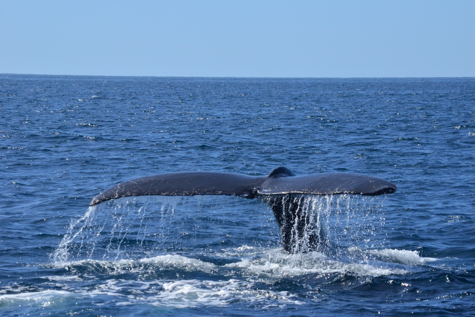 Embark on a Magical Whale Watching Cruise